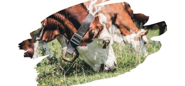 Krmivá a chovateľské potreby